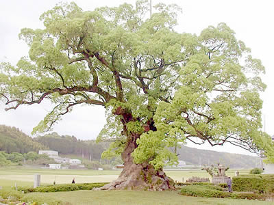 oakstyle.jpg